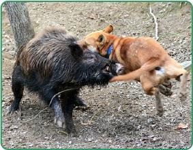 猟犬の育成や訓練方法なら100年...
